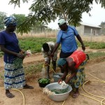 Die Ernte wird gewaschen